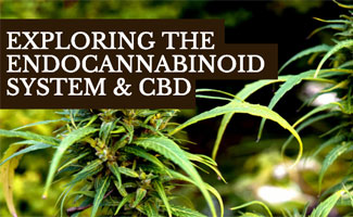 Weed plant (caption: Exploring The Endocannabinoid System & CBD)
