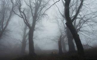 Foggy trail