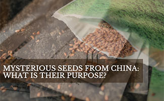 Seeds in envelope from China in the mail (Caption: Mysterious Seeds From China: What Is Their Purpose?)