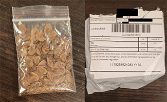 Seeds in the mail from China
